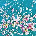 海洋散骨葬式